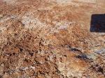 White Sands, Dec 27, 2011. Gypsum crystals
