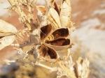 White Sands botanics - Soaptree yucca