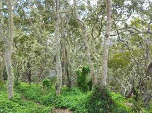 Dense Vegetation 3