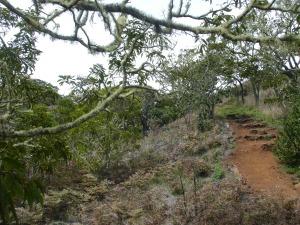 The Kipuka Pu'u Huluhulu trail