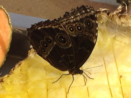 I could not identify this gorgeous butterfly